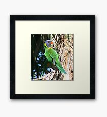 two tails Framed Print