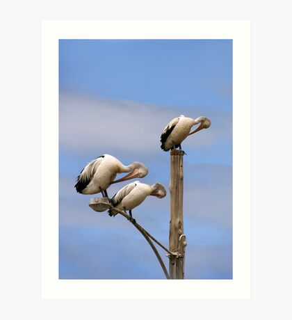 Pelican Preening Pole Art Print
