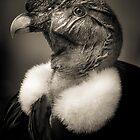 Andean Condor Justice by alan shapiro
