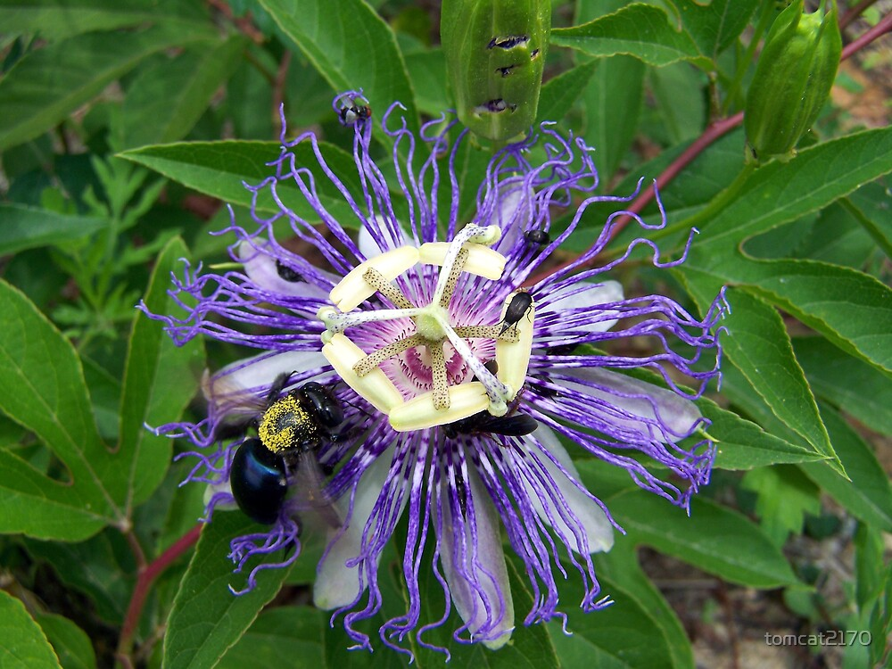 passion flower bug party by tomcat2170