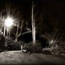 The Path by Robert Ibelings