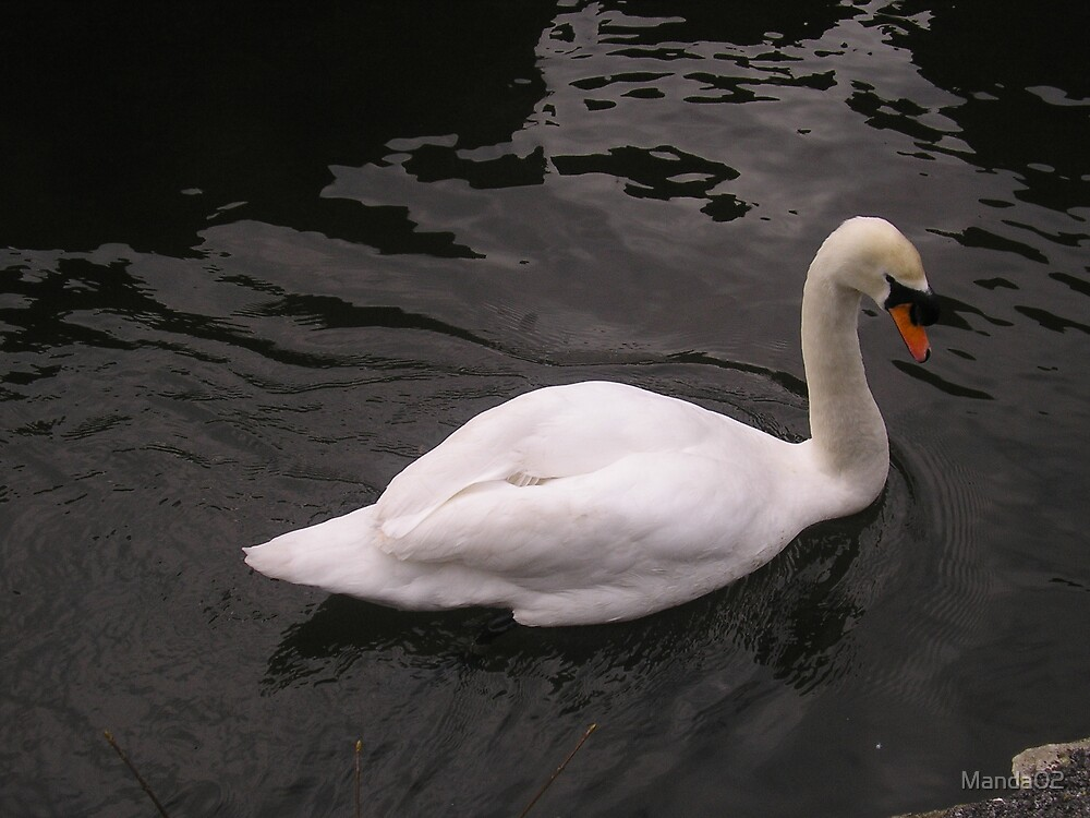 Swan by Manda02