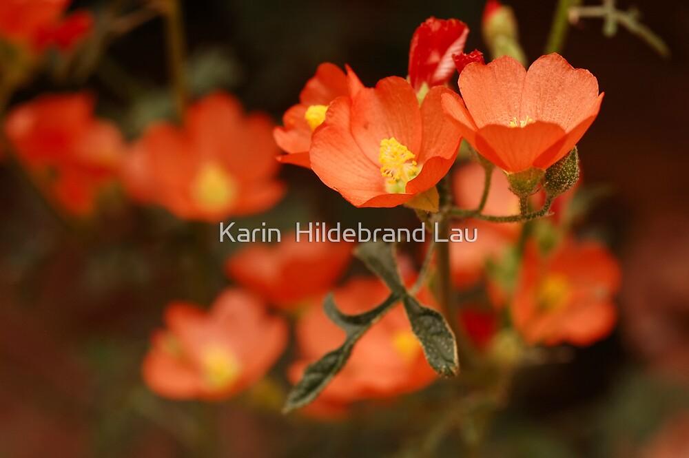 Orange Globe Mallow by Karin  Hildebrand Lau
