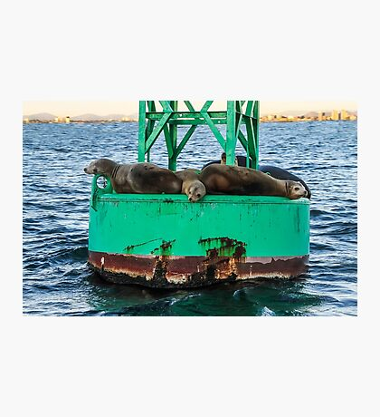 Oh Buoy! Seals!  Photographic Print