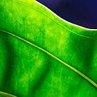 deep green by Manon Boily