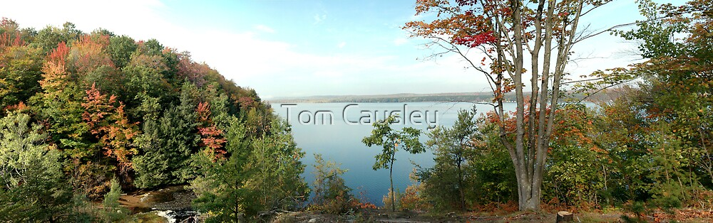 Panoramic View  by Tom Causley