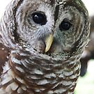 OWL by Lisa Hildwine