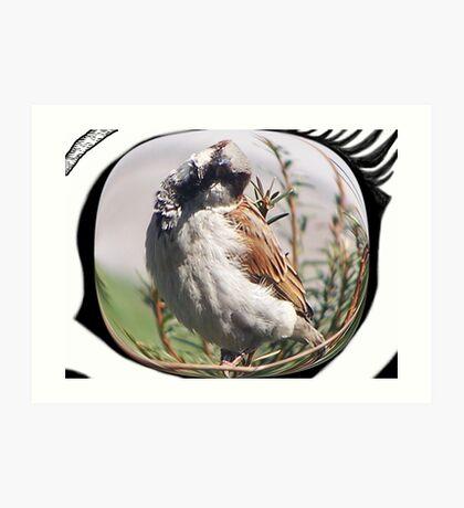 Cock-eyed Art Print