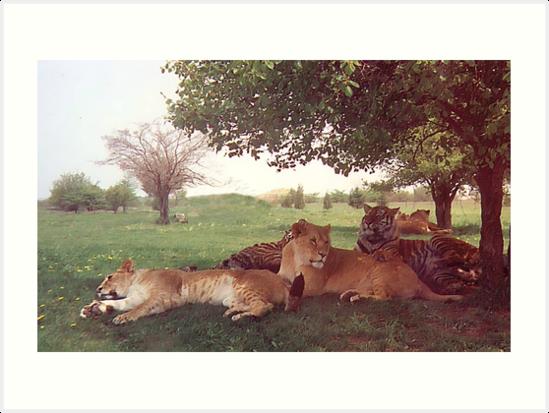 Cats! by Daniela Weil