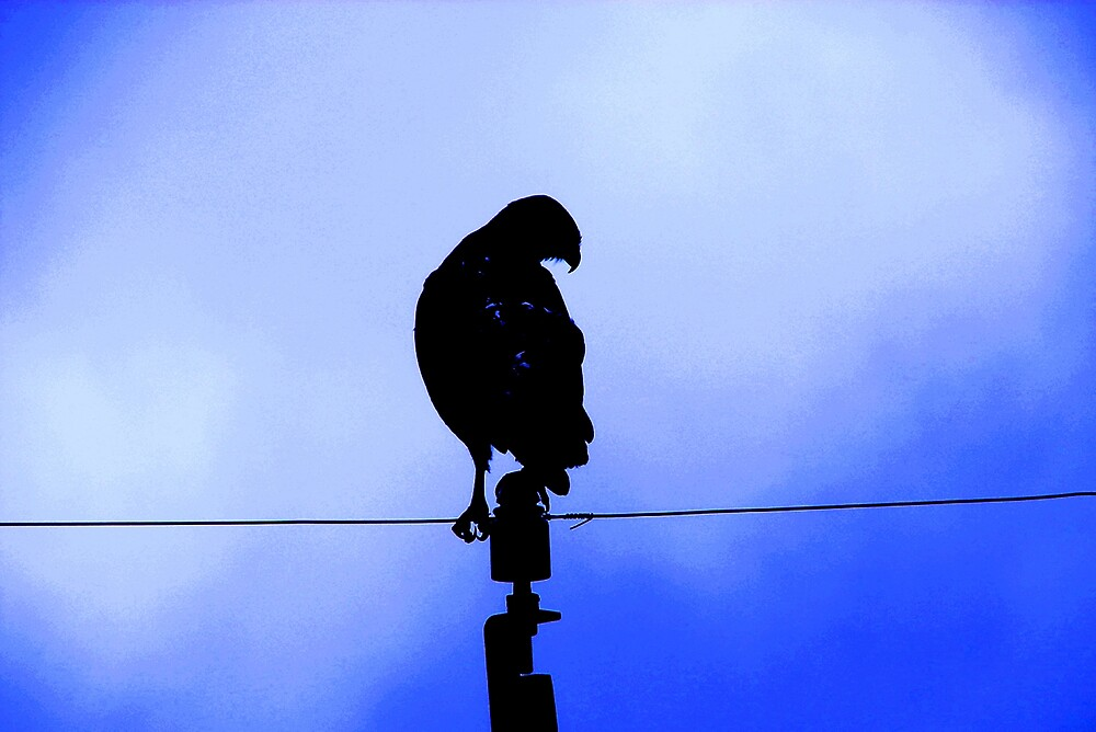 Call me Hawk by Wazi