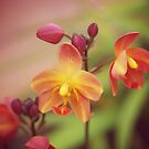 orchid day by sabrina card