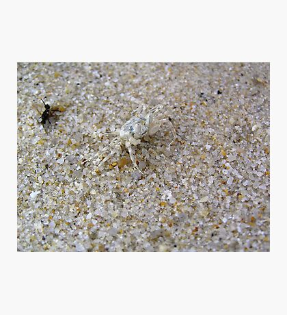 Tiny, tiny crab Photographic Print