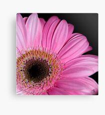 Pink Gerbera  Canvas Print