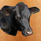 Black Angus Portrait by dogplay