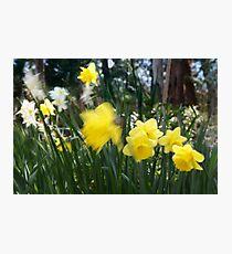 Spring.. Photographic Print
