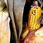 Corn by NervousNellie