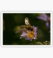 Hoverfly Sticker