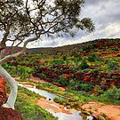 The Finke River - Palm Valley by Adam Gormley