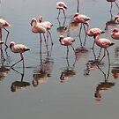 Flamingoes - Namebia by Gilberte