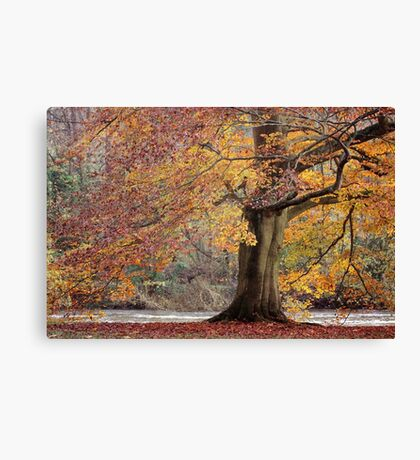 Every leaf speaks bliss to me... Canvas Print