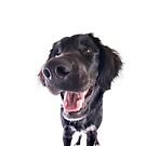 Funny Black Dog with Big Nose by idapix