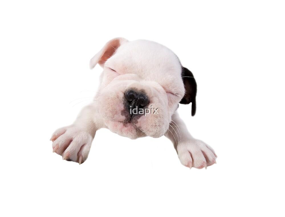 Bulldog Kiss by idapix