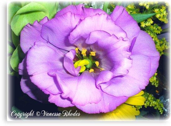 Baroque Rose by ladyvanessa
