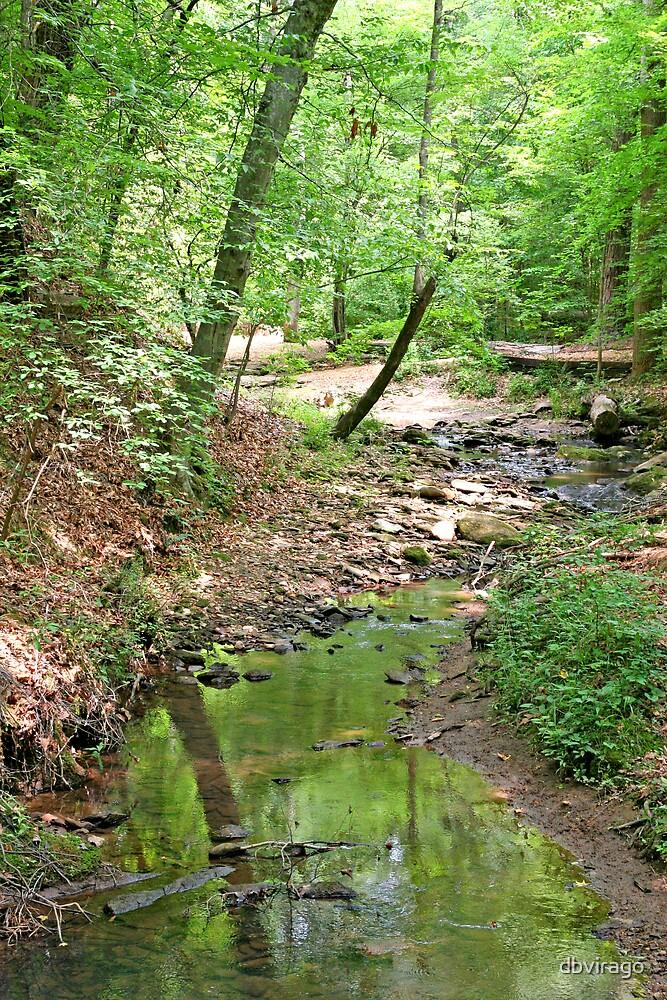 Quiet Creek by dbvirago