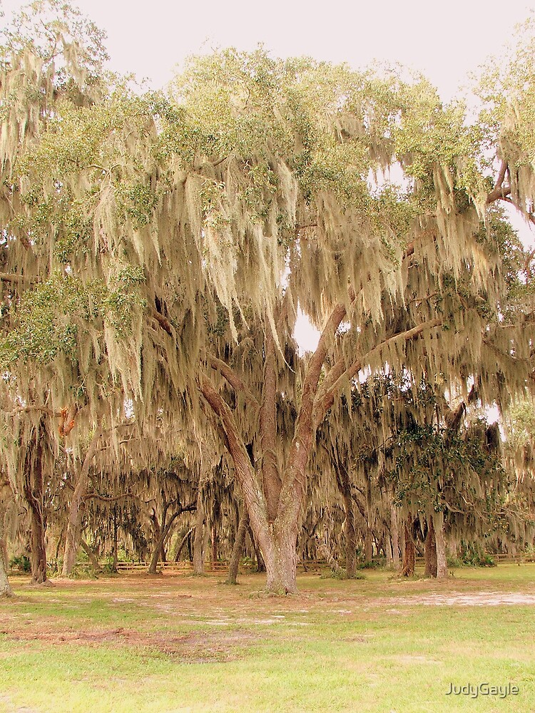 Among the Oak Trees by Judy Gayle Waller