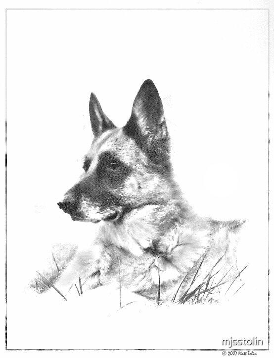German Shepherd by mjsstolin