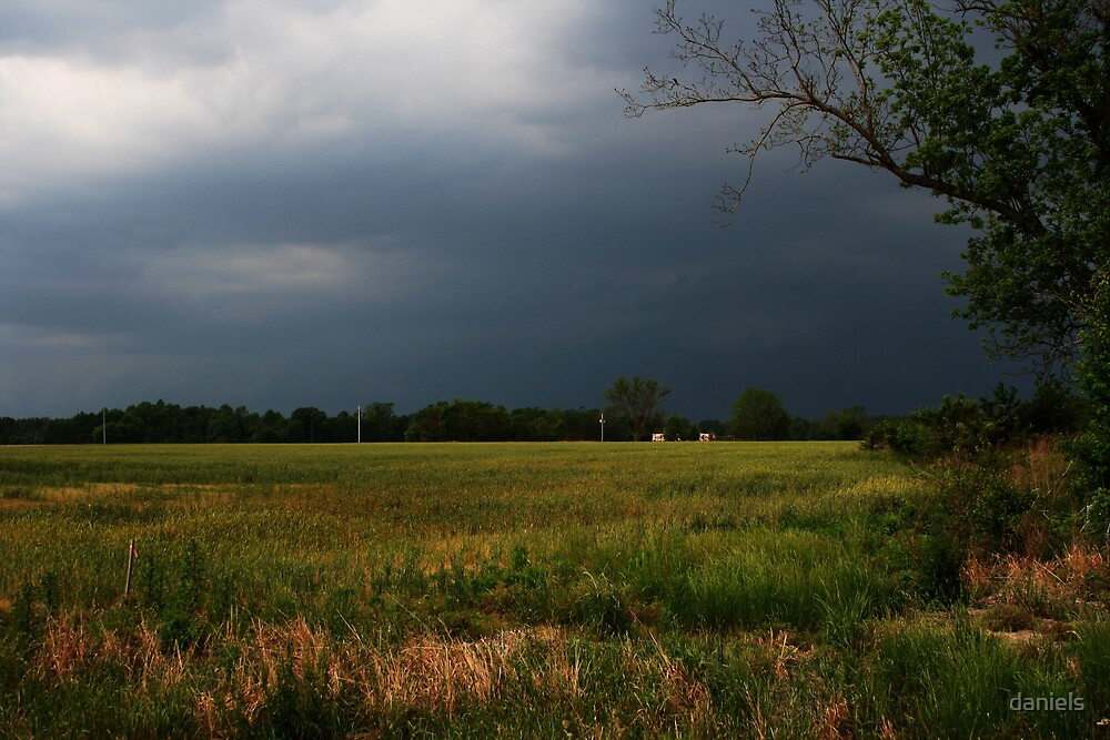 storm over summer wheat_color by daniels