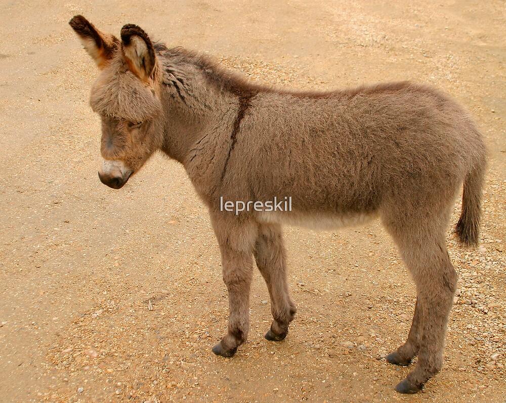 Baby donkey by lepreskil