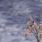Dual Day Lilies by Wayne King