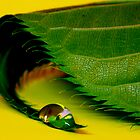 drop on leaf by studiofascino