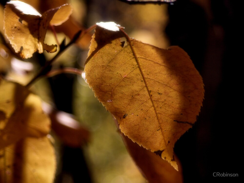 Autumn Glow by CRobinson