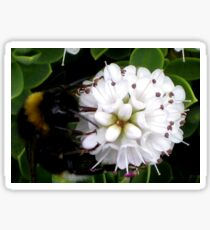 Lunch time for Bees - macro photography Sticker