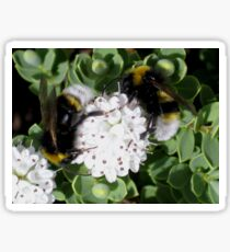 Two bees in a Bush - Macro photogrpahy Sticker