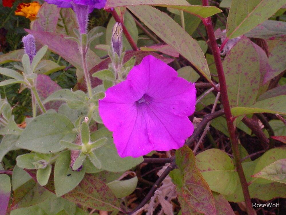 Vibrant Purple by RoseWolf