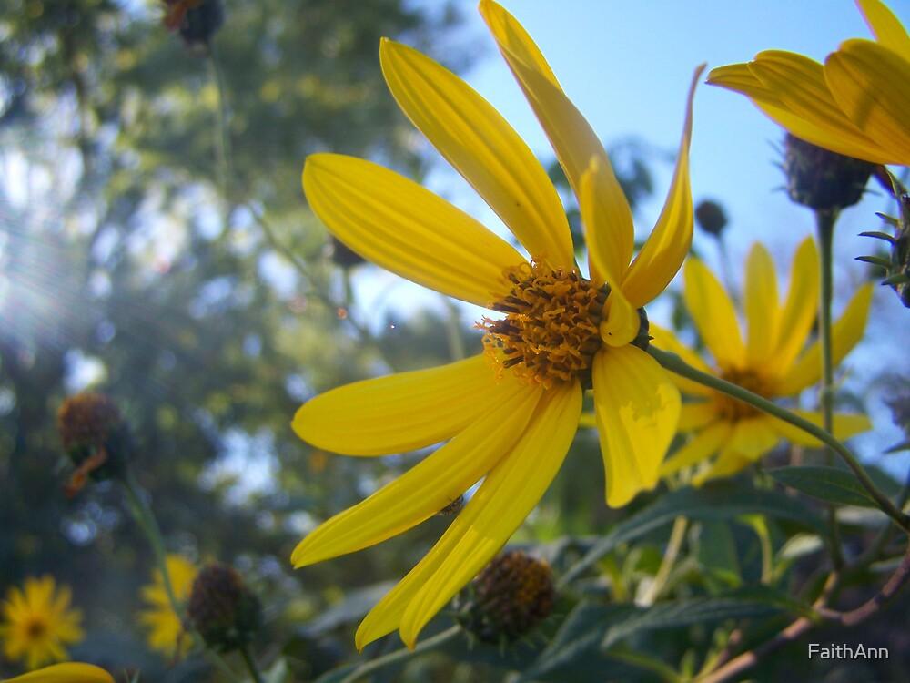 Up Close Shoot of a Yellow Daisy by FaithAnn