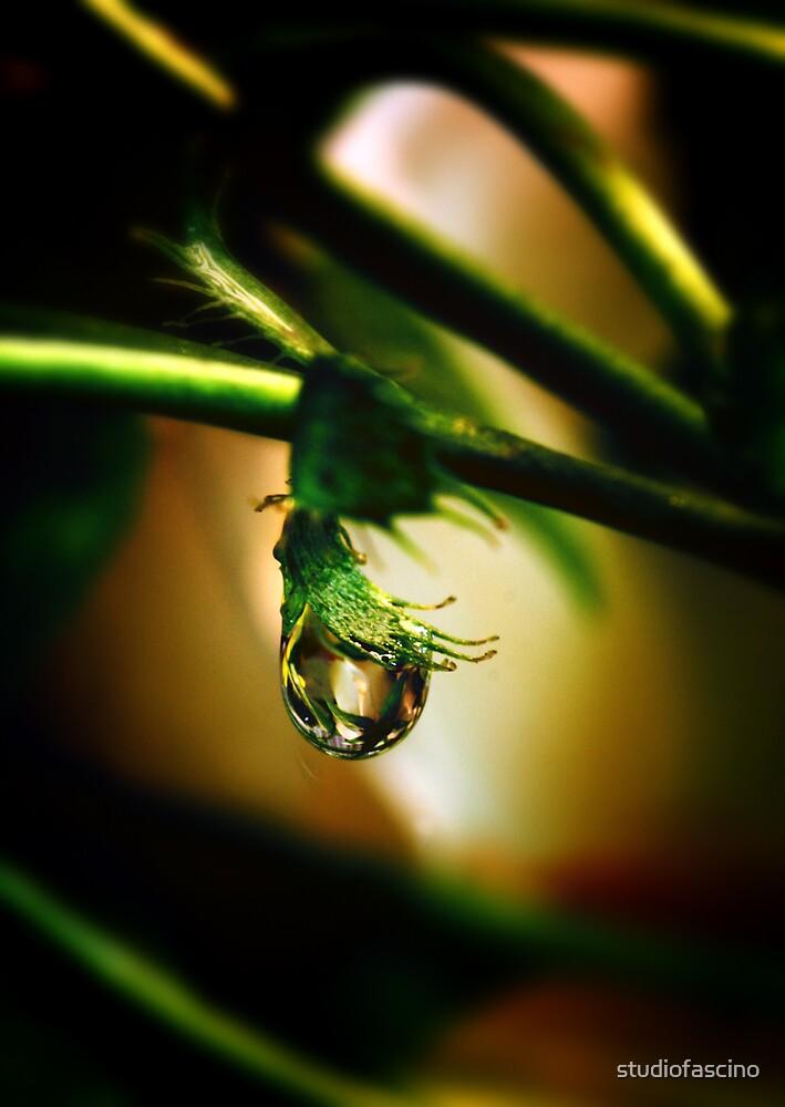 rainforest by studiofascino