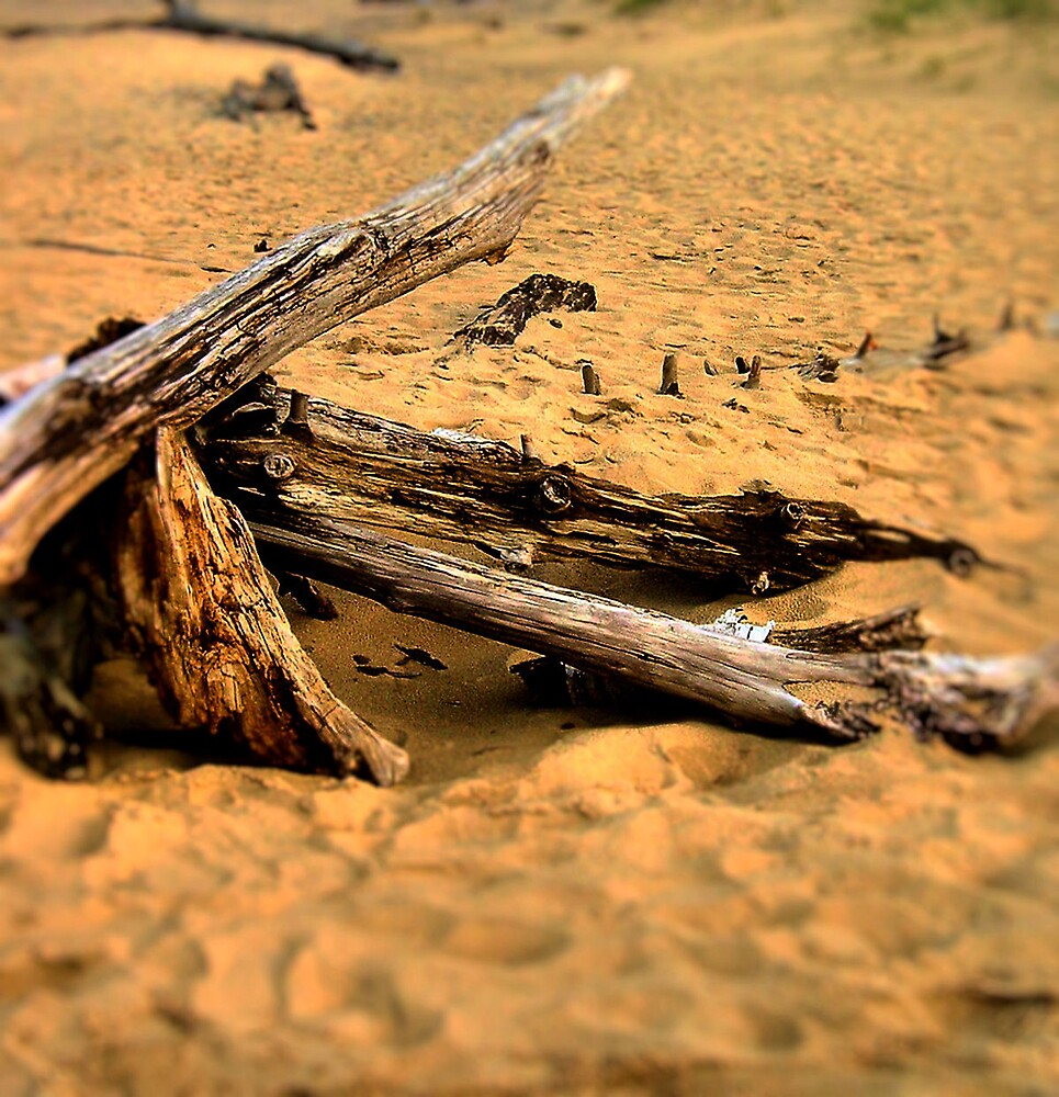 Driftwood by Erika Benoit