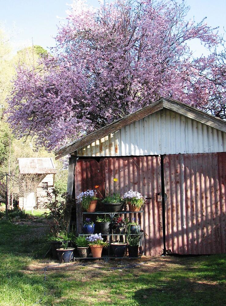 Spring Blossom by Rachel  Moait