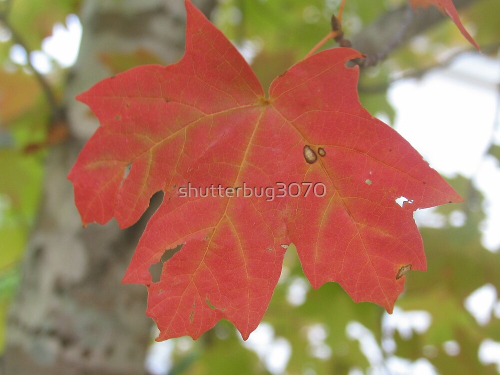 Sign of Fall by shutterbug3070