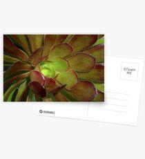 Succulent Postcards