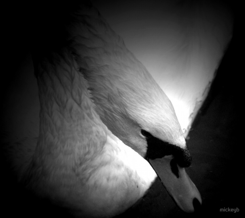 swans the name... by mickeyb