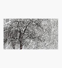 9.3.2017: Apple Tree and Snowfall II Photographic Print