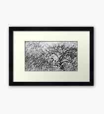 9.3.2017: Apple Tree and Snowfall III Framed Print