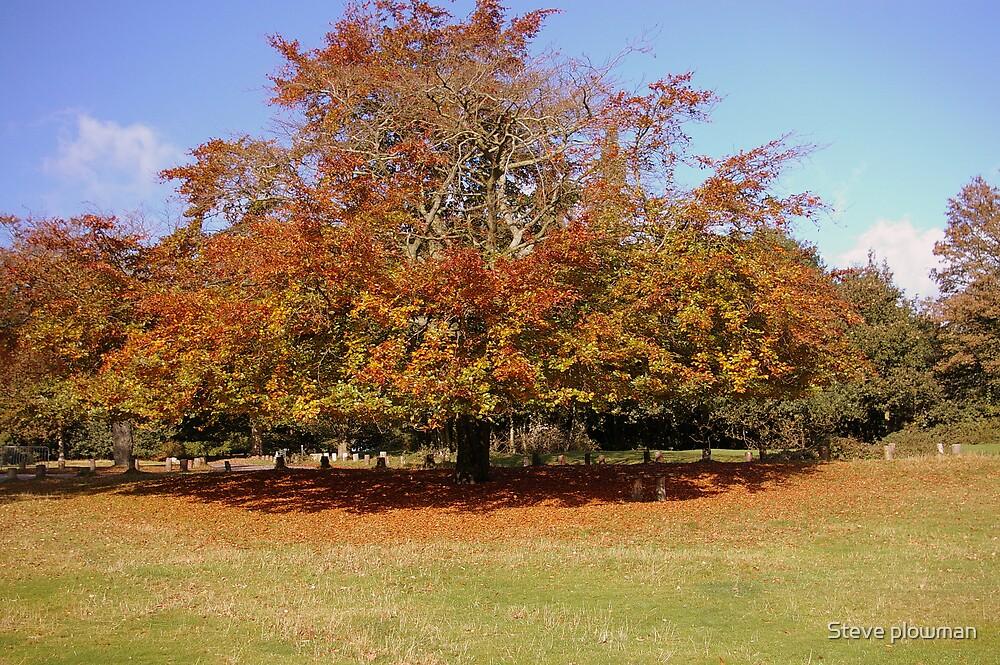 Autumn Colours 2 by Steve plowman