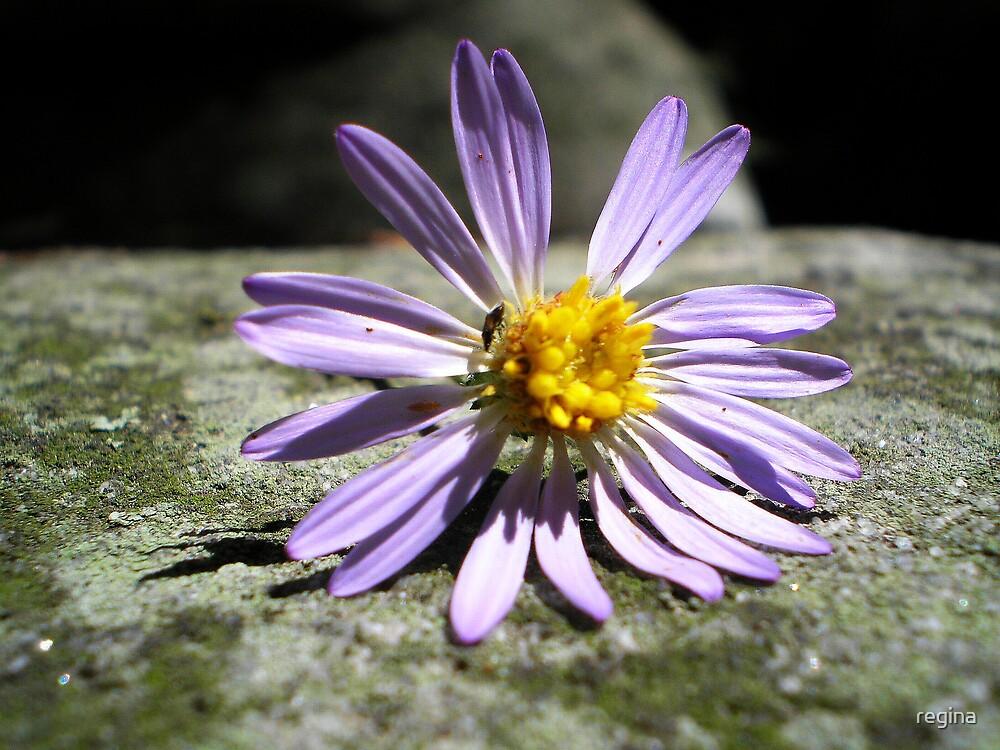 laura's flower by regina