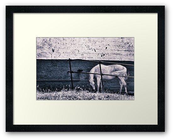White horse by Silvia Ganora